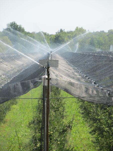 Il nostro lavoro mela bio for Irrigazione per aspersione